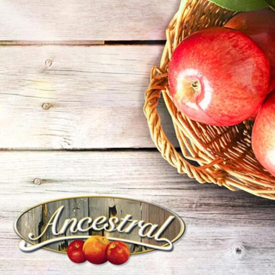 Ancestral Vinegar